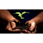 Thumbnail taleb plante main