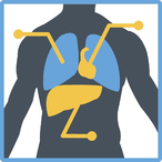 Thumbnail 7551 cursus training beginnerscursus medische terminologie